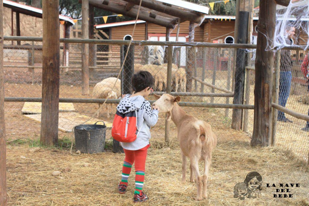experiencia con ovejas y cabras en la granja aventura park