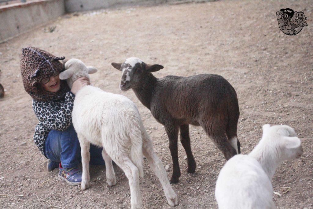 granja con corderitos y la peque abrazando uno blanco