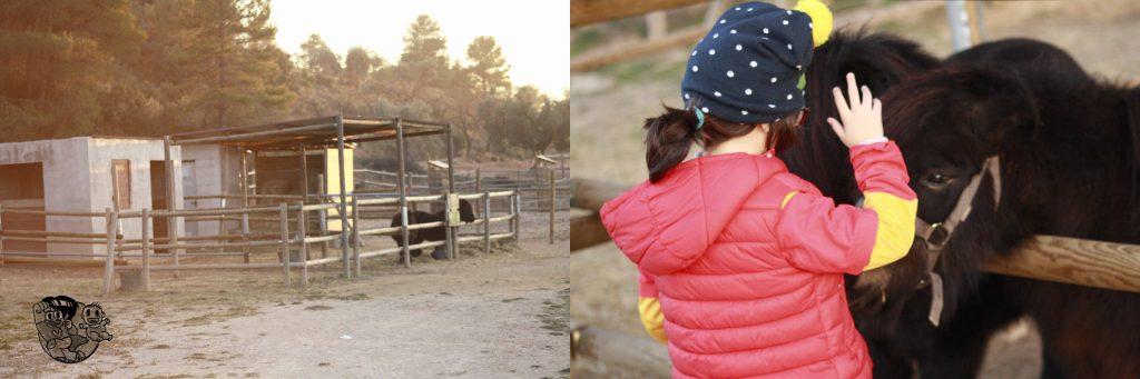 el establo de ponis y los dos ponis de arnes